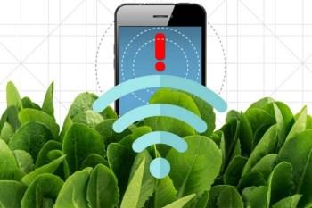 Aplicaciones de la nanotecnología vegetal