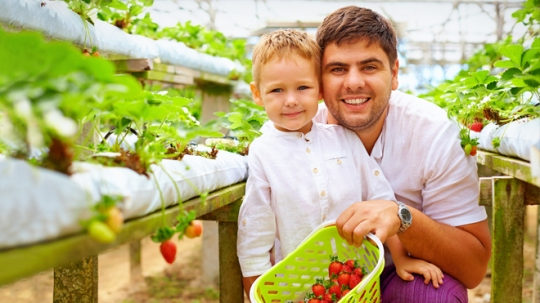 Syngenta, leader mondial de l'agroalimentaire, met en place un programme global de suivi des dossiers relatifs à la conformité
